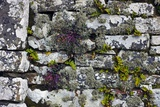 Drystone Wall with Plants Prints by Dr. Keith Wheeler