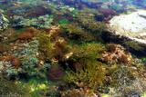Meeresalgen Fotografie-Druck von Dr. Keith Wheeler