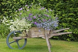 Wooden Wheelbarrow Planter Prints by Dr. Keith Wheeler