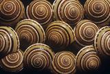 Sundial Snail Shells Posters by Dirk Wiersma