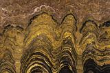 Fossil Stromatolite Photographic Print by Dirk Wiersma