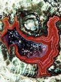 Rhyolitic Geode Reprodukcja zdjęcia autor Dirk Wiersma
