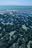 Stromatolites Prints by Dirk Wiersma