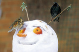 Birds Perched on a Snowman Photographic Print by Dr. Keith Wheeler