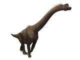 Brachiosaurus Dinosaur, Artwork Posters by  SCIEPRO