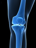 Knee Bones, Artwork Photographic Print by  SCIEPRO