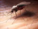 Mosquito, Artwork Photographic Print by  SCIEPRO