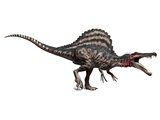 Spinosaurus Dinosaur, Artwork Premium Photographic Print by  SCIEPRO