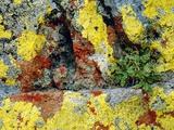 Lichen Prints by Dirk Wiersma