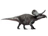 Zuniceratops Dinosaur, Artwork Premium Photographic Print by  SCIEPRO