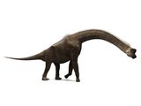 Brachiosaurus Dinosaur, Artwork Photographic Print by  SCIEPRO