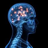 Brain Activity, Artwork Premium Photographic Print by  SCIEPRO