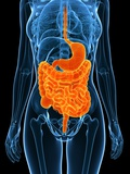 Healthy Digestive System, Artwork Print by  SCIEPRO