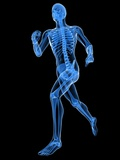 Running Skeleton, Artwork Photographic Print by  SCIEPRO