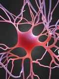 Nerve Cell, Artwork Photographic Print by  SCIEPRO