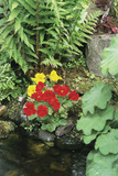 Mimulus Flowers Beside a Pond Posters by Archie Young