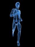 Running Skeleton, Artwork Fotodruck von  SCIEPRO