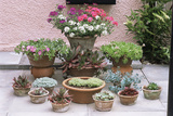 Garden Patio Display Photographic Print by Archie Young