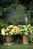 Container Plants Photographic Print by Archie Young