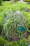 Rye Grass In Basket Cloche Photographic Print by Mark Williamson