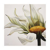 Daisy Breeze Premium Giclee Print by Carolina Alotus