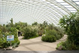 Glasshouse Interior Photographic Print by Mark Williamson