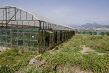 Glasshouses Near Gazipasa, Turkey. Posters by Mark Williamson