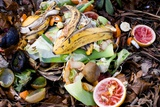 Food Waste on Compost Heap Photographic Print by Mark Williamson