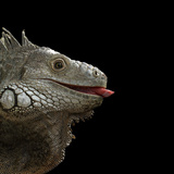 Iguane Photographie par Linda Wright