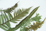 Fern Fronds And Sori Photo by Archie Young