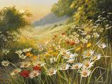 Mary Dipnall - Evening Sun Speciální digitálně vytištěná reprodukce