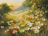 Evening Sun Premium Giclee Print by Mary Dipnall