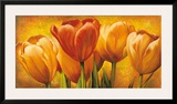 Bouquet of Orange Tulips Poster by David Pedersen