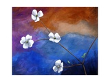 Dogwood Photographic Print by Cindy Thornton