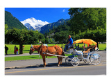 Horse-drawn Carriage on Hoeheweg Street with View of the Jungfrau Massif, Interlaken Giclee-tryk i høj kvalitet