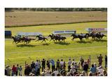 Horse race in Ballinrobe, County Mayo, Connacht, Ireland Wydruk giclee premium