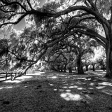 Under the Canopy I Prints by Robert Jones