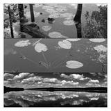 Pond-Land 1 Posters by Jean-François Dupuis