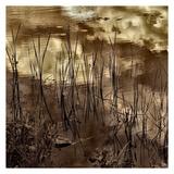 Infrared Pond 6 Posters par Jean-François Dupuis
