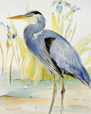 Great Blue Heron Posters by Lanie Loreth