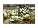Ducks in the Pond Giclee Print by Alexander		 Koester