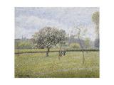 Apple Tree in Flower at Eragny Reproduction procédé giclée par Camille Pissarro