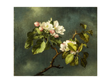 Apple Blossoms Giclee Print by Martin Johnson Heade
