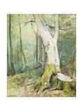 Interior Woodland Print by Soren Emil Carlsen