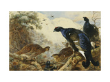 Blackgame Affiches par Thorburn Archibald