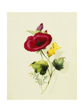 A Malope and Another Prints by Thomas		 Holland