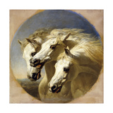 Pharaoh's Horses Prints by John Frederick Herring I