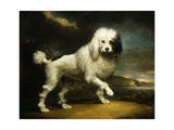 A Standard Poodle in a Coastal Landscape Premium Giclee Print by James		 Northcote