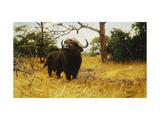 A Kaffir Buffalo in Prairie Grass Prints by Wilhelm Kuhnert