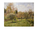 Spring at Eragny Posters by Camille Pissarro